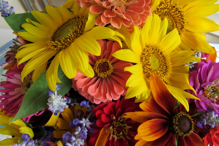 language-of-flowers