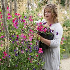 Sarah Raven with sweet peas in the cutting garden at Perch Hill