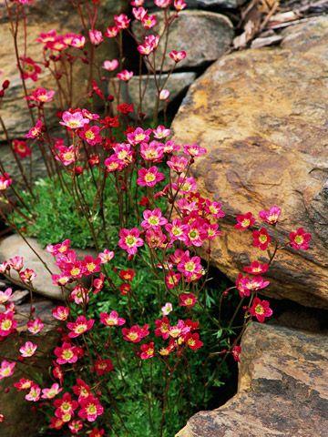 8d74db7ef5edd513e92885e1ec185598--rock-garden-design-garden-design-ideas