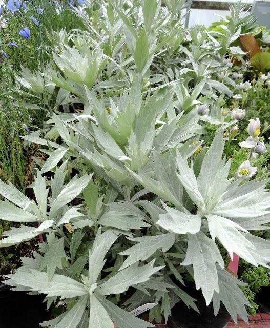 d1a8be16139489855cb95579dc6e7c1b--garden-borders-flower-beds
