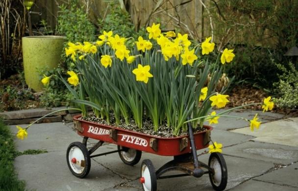 daffodilsinwagon
