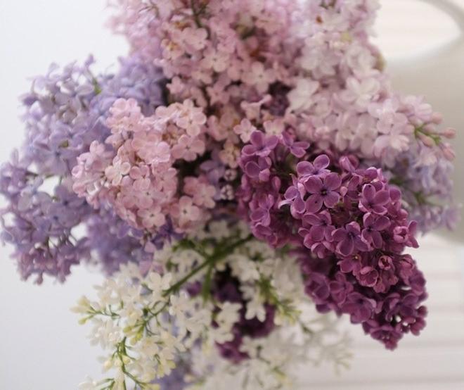 lilac-bouquet-e1554677414536.jpg